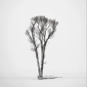 Tenacity of Trees
