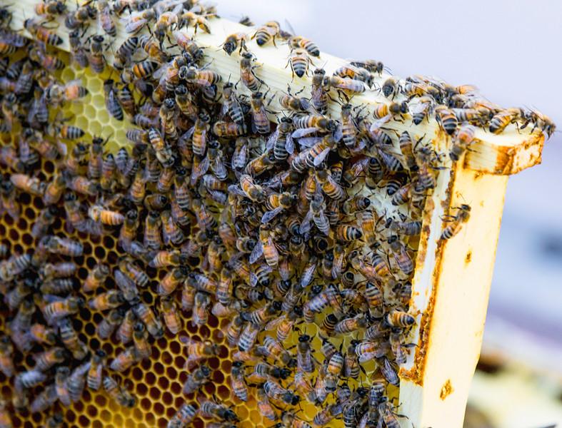 Honeybees at Work I