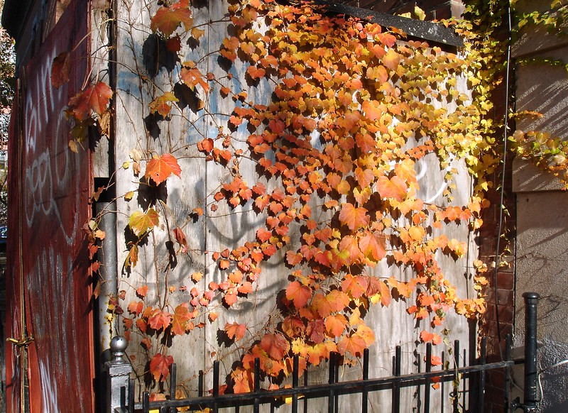 Fall color obliterates graffiti..