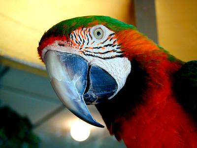 Parrot Jungle - 2002