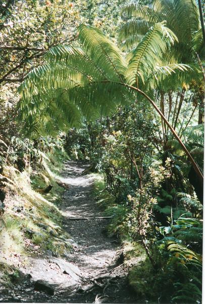 199805-hawaii-06105.jpg