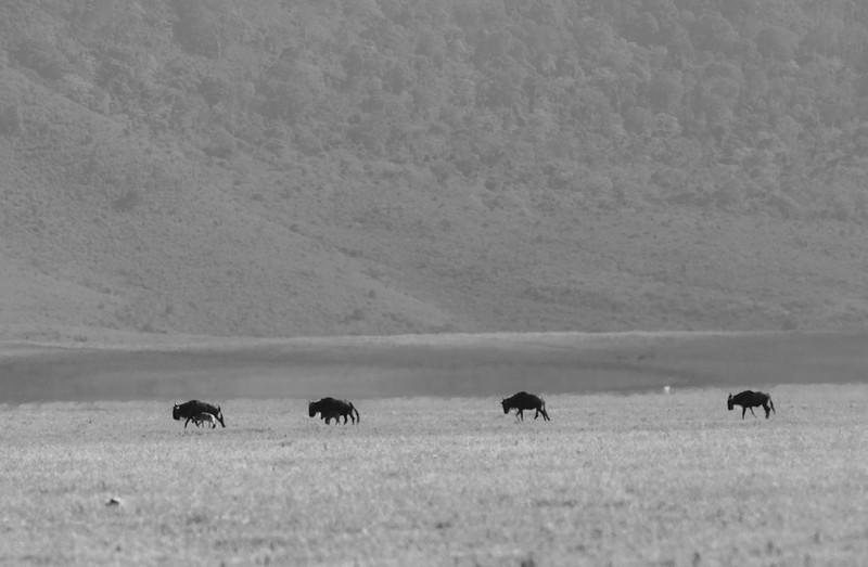 Tanzania_Feb_2018-24.jpg