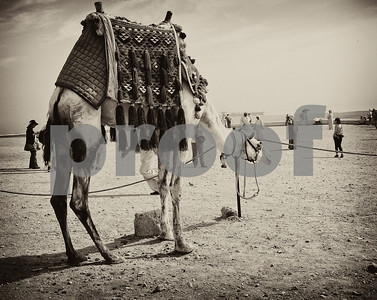 Egypt in Black and White