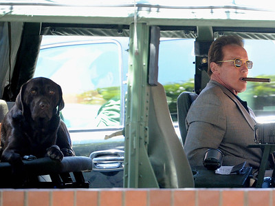 EXC:  Arnold Schwarzenegger Gives Pet Labrador A Lift In Veggie Hummer!