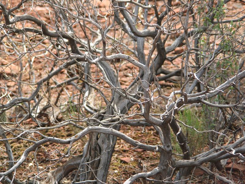 Glorious Jumble, Boynton Canyon, AZ
