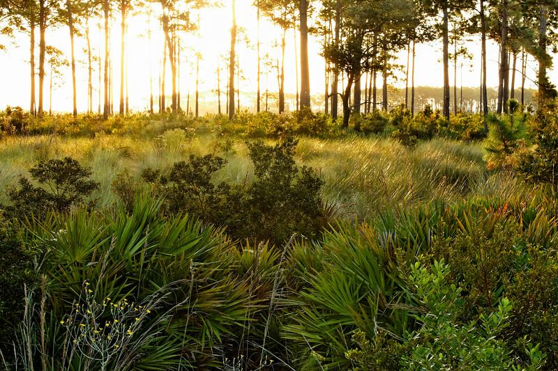 Spring Sunrise - Sun pours through the spring grasses