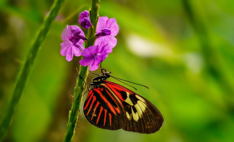 Butterfly-070.jpg