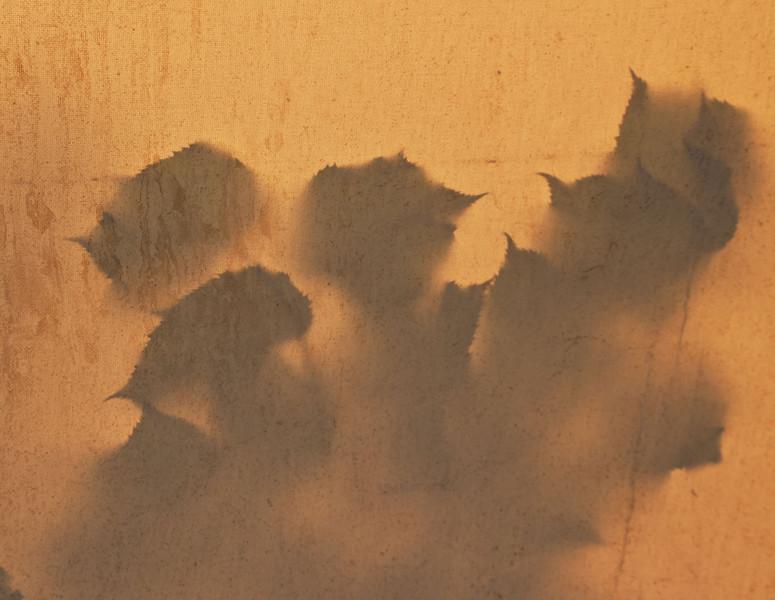 Leaf shadows on canvas.