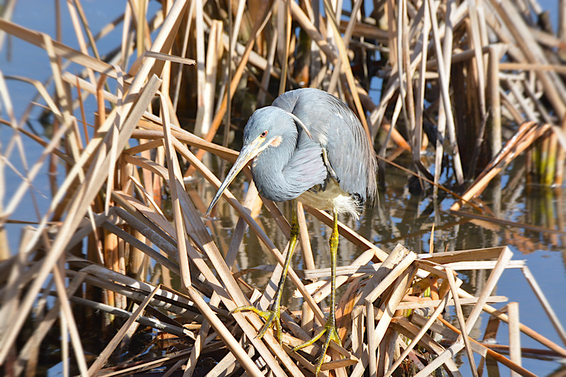 2018 huntington state beach egret tba walkin best-.jpg