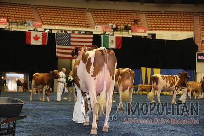 WDE R&W Holstein Int Cows 2015