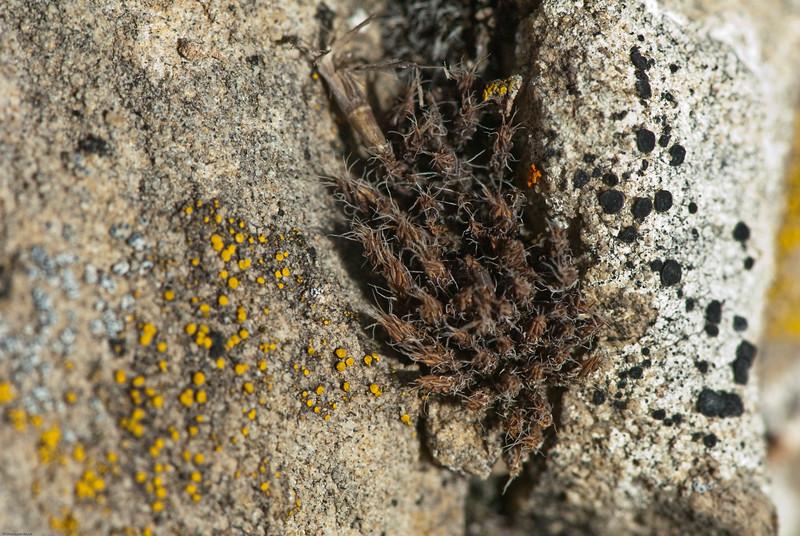 Bozeman Lichens-9.jpg