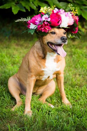 Rochelle-Puppies
