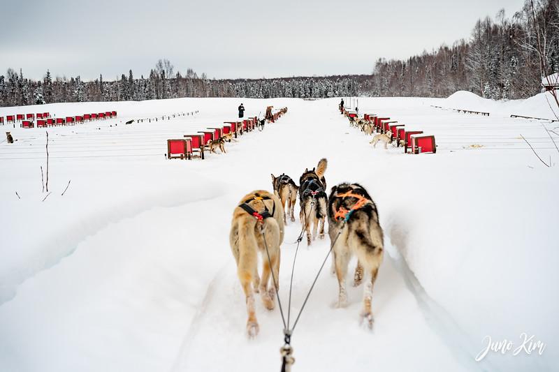 Alaska Helicopter Tours Winter Dog Sledding  Feb 24, 2021