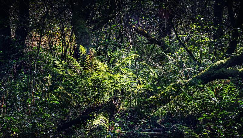 Forest Shadows-161.jpg