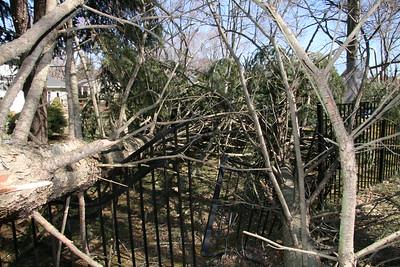 Andy's Tree 2008