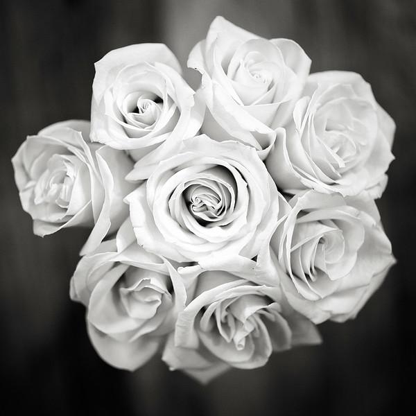 cream-roses-03.jpg