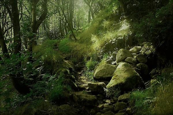 Erringden Moor ;31st July & 4th August 2020