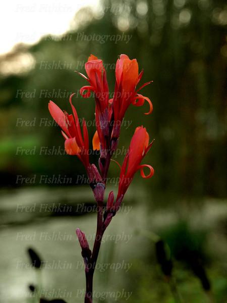 sayen flower spike.jpg