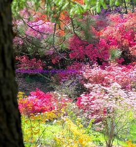 Bloomin' Biltmore ~ The Fairyland Gardens of Biltmore Estate