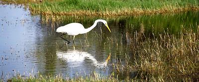 20170326 - Herdsman Lake Birding