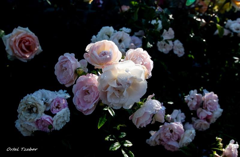 פרחים לבנים.jpg