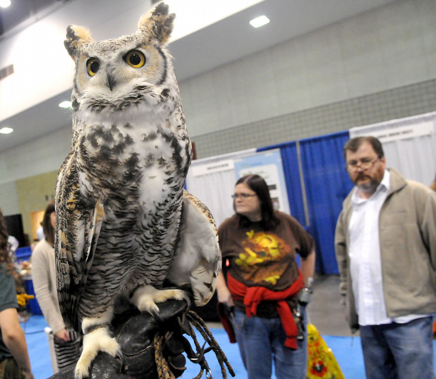 . Samantha, a Great Horned Owl used as an educational bird at the Raptor Center, sits on the hand of interpretive naturalist Adam Barnett at the Raptor Center booth at the conference. The Raptor Center is part of the University of Minnesota College of Veterinary Medicine. (Pioneer Press: John Doman)