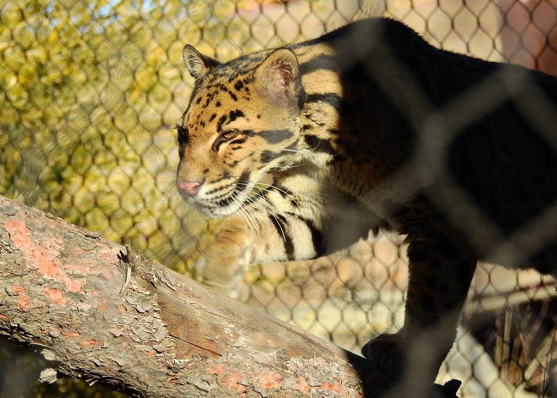 Denver Zoo 2018 (2657).JPG