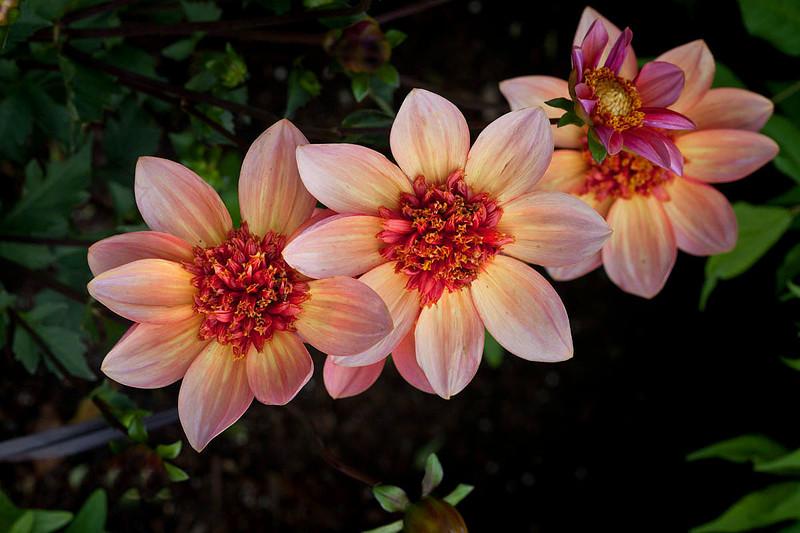 Botanicgarden11 084.jpg
