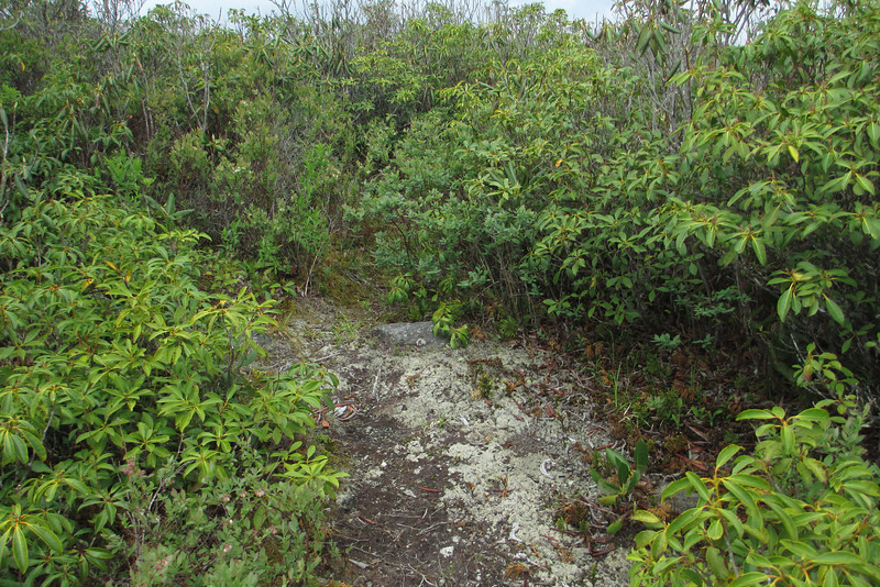 Art Loeb Trail (5,950')