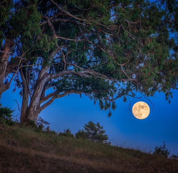 Thunder Moon & Eucalyptus Square, Sea Ranch, CA