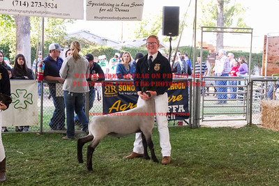 2016 Citrus Fair - Sheep
