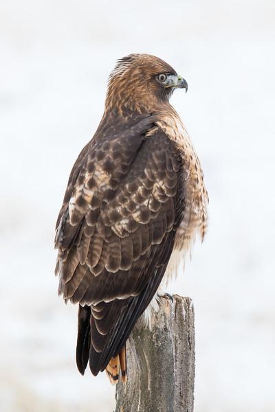 Sierra Hawks Winter 2018-8.jpg
