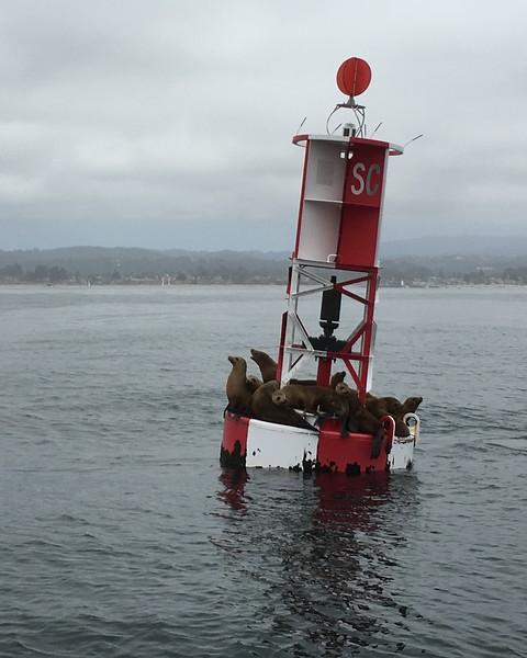 Sailing the Santa Cruz Coastline