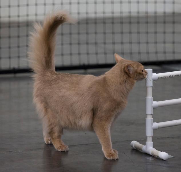 CatShow2014207.jpg