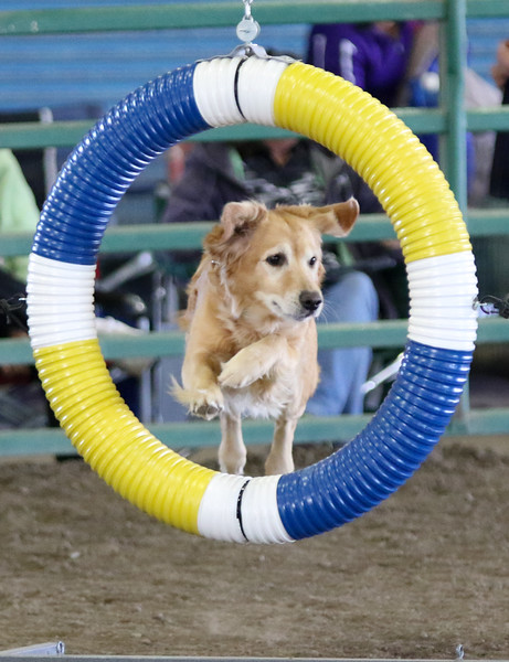 3-15-2015 Bloodhound-0360.jpg