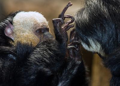 Beardsley and Bronx Zoo III