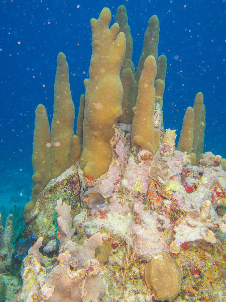 Tulum Trip - Diving 20130405-17-40 _405262404.jpg