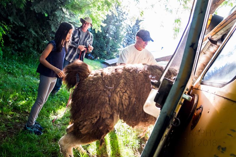 Jay Waltmunson Photography - Wallowa Llamas Reunion - 053.jpg