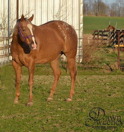 Upper Class Coed & foal