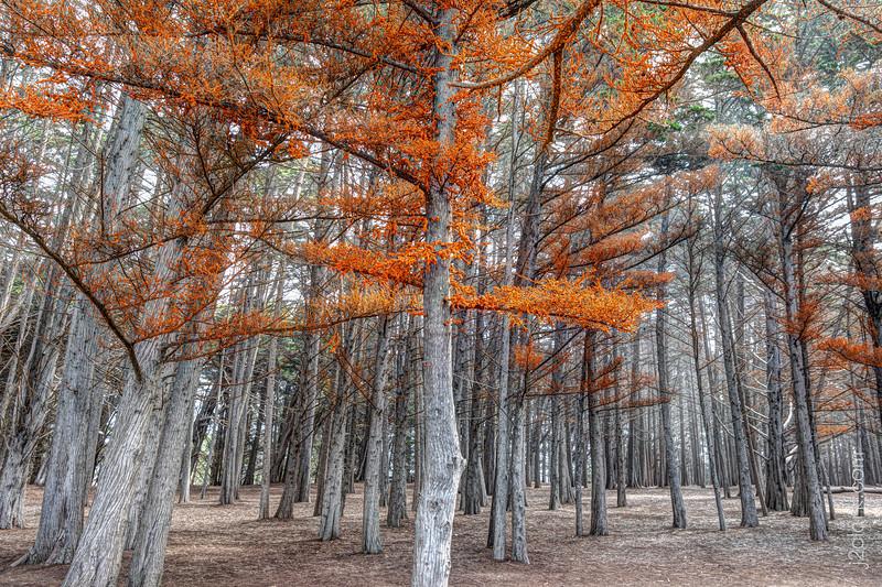 Carrot Trees
