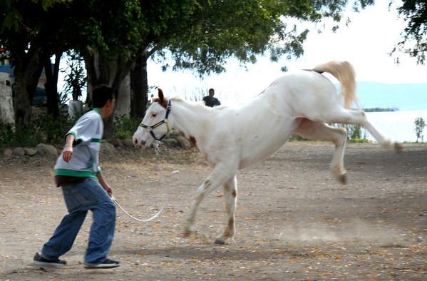 Horses and Donkeys in Mexico
