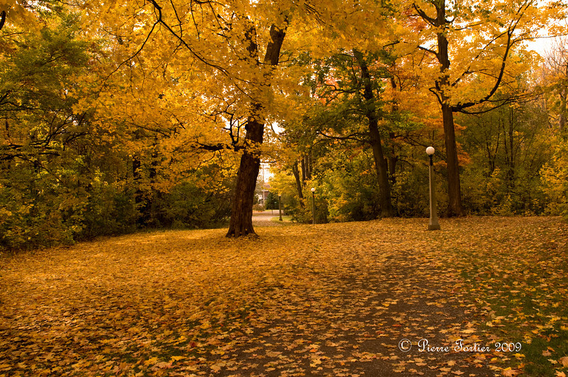 Fall Coulours, Hampton Park