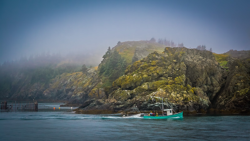 Grand Manan Island - Morning Fog