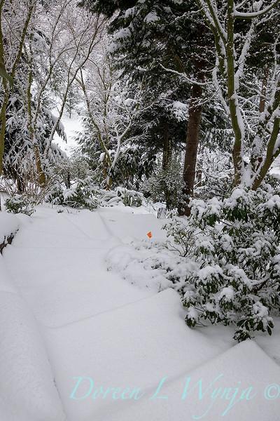 Winter wonderland_8821.jpg