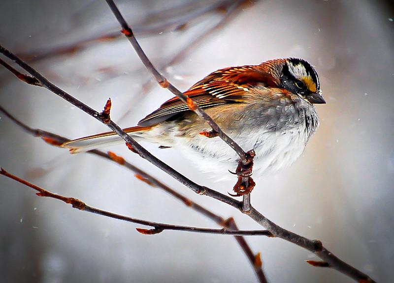 winter_bird.jpg