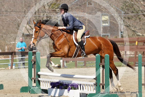 2014 Sunflower Meadows Equestrian
