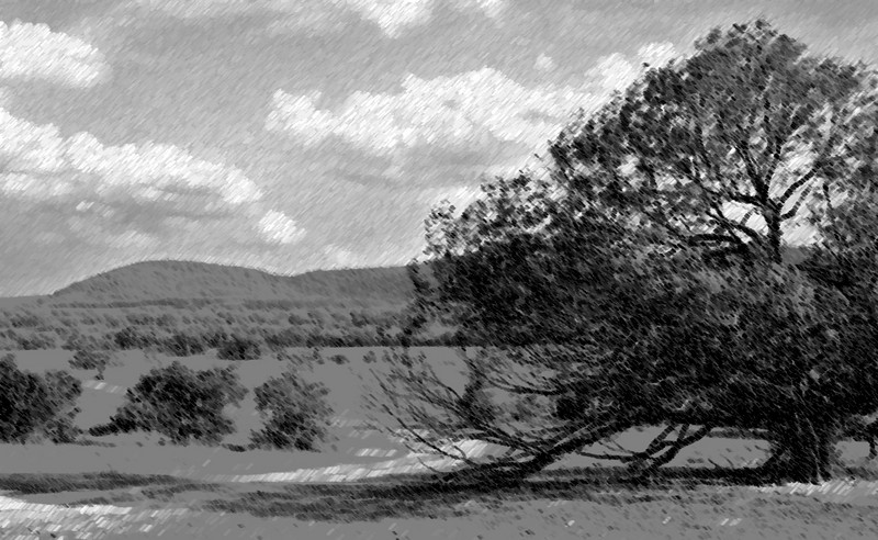 Mesquite in pasture chalk and charcoal.jpg