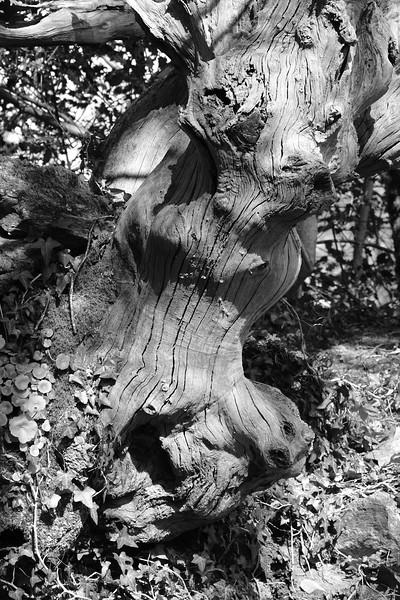 Rupert - tree monster