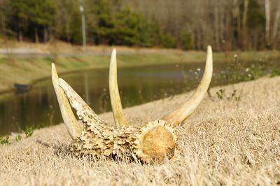 Deer Hunting