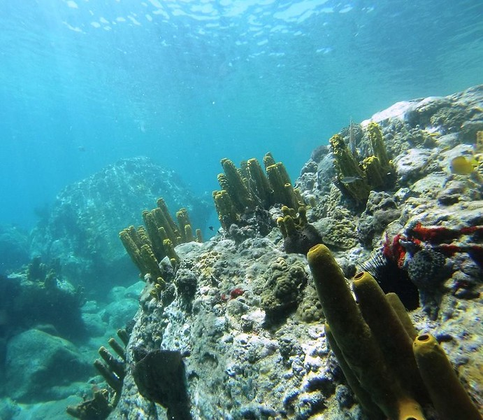 Anse Cochon Sponges.jpg